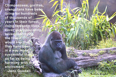 Gorilla Digital Art - Jane Goodall Gorilla by Barbara Snyder
