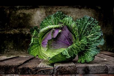 Brassica Oleracea Photograph - January King Cabbage by Aberration Films Ltd