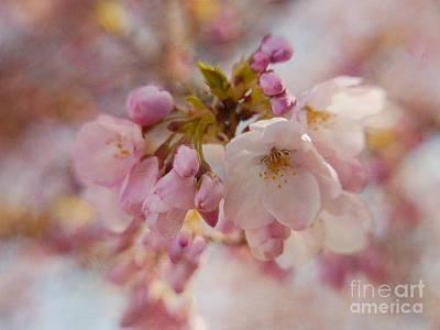 Japanese Cherry In Pastel Print by Irina Wardas