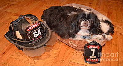 Japanese Chin Photograph - Japanese Chin Fire Dogs And Fire Helmet by Jim Fitzpatrick