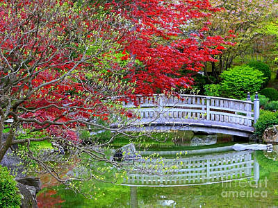 Japanese Garden Bridge In Springtime Print by Carol Groenen