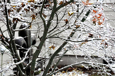 Autumn Photograph - Japanese Maple And  Fleur-de-lys Under The First Snow by Tanya  Searcy