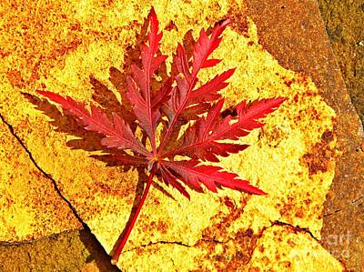 Serrated Photograph - Japanese Maple Leaf On Sandstone by Chris Berry