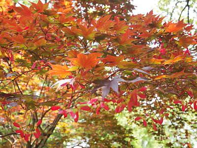 Japanese Maple Spring 2 Print by Nancy Kane Chapman