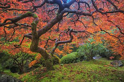 Maple Season Photograph - Japanese Maple Tree by Mark Kiver