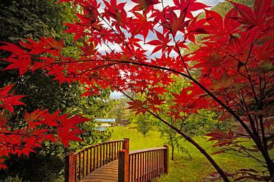 Japanese Maples Print by Debra and Dave Vanderlaan