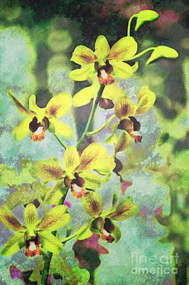 Botanical Photograph - Jaquelyn by Floyd Menezes