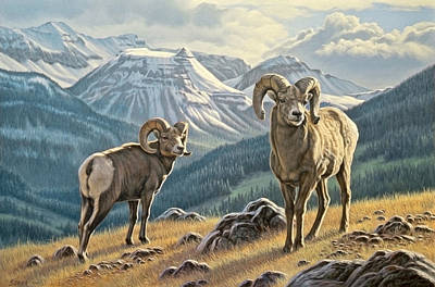 Jasper Rams Print by Paul Krapf