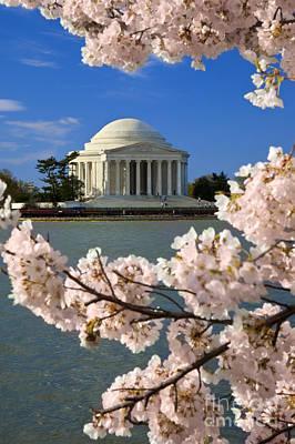 Jefferson Memorial Cherry Trees Print by Brian Jannsen