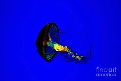 Jellyfish Original by Angelika Bentin