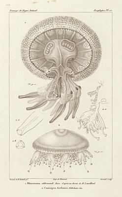Jellyfish Print by King's College London