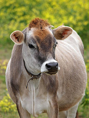 Jersey Cow With Attitude - Vertical Print by Gill Billington
