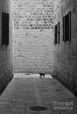 Jerusalem's Cat Original by Franz Gustincich