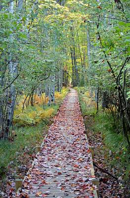 Jessup Path Acadia National Park Original by Lena Hatch