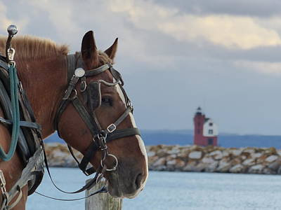 Belgian Draft Horse Photograph - Jethro's View by Molly McGreevy