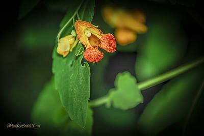 Red Photograph - Jewel Weed On The Macomb Orchard Trails Washington Michigan by LeeAnn McLaneGoetz McLaneGoetzStudioLLCcom