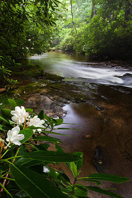 Jewels Of The Davidson River 2 Print by Rob Travis