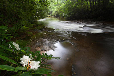 Jewels Of The Davidson River Print by Rob Travis