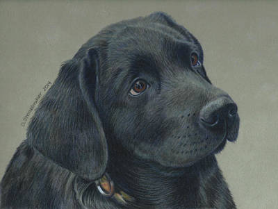 Black Labrador Drawing - Joch by Debbie Stonebraker