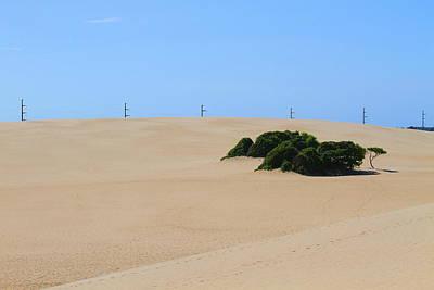 Dune Photograph - Jockey's Ridge 27 by Cathy Lindsey