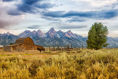 Bison Photograph - John Moulton Barn - Grand Teton National Park by Andres Leon