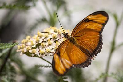 Girl Photograph - Julia Butterfly by Adam Romanowicz