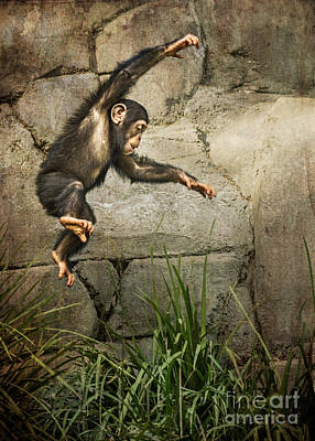Chimpanzee Photograph - Jump For Joy by Jamie Pham