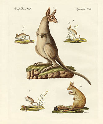 Kangaroo Drawing - Jumpers by Splendid Art Prints