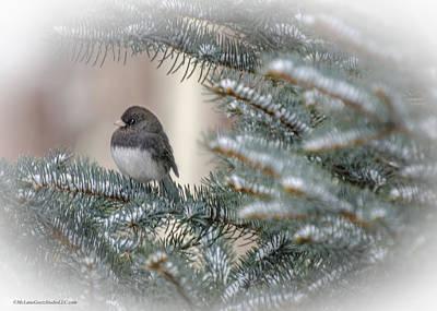 Trees Photograph - Junco In Pine Landscape by LeeAnn McLaneGoetz McLaneGoetzStudioLLCcom