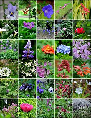 Northwest Photograph - June Blooms In The Pacific Northwest Garden Zone 7b by Tanya  Searcy