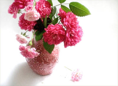 Floral Bouquet Photograph - June Roses In A Pink Vase by Louise Kumpf
