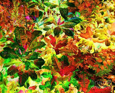 Mental Imagery Photograph - 	Jungle Fantasy				 by Ann Johndro-Collins