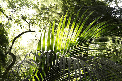 Jungle Light Print by Les Cunliffe