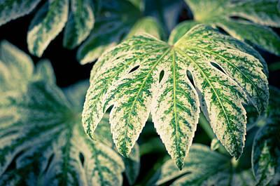 Leaves Photograph - Just A Leaf by Priya Ghose