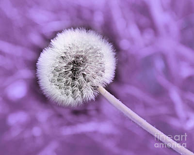 Dandelion Photograph - Just Dandy Lilac by Andee Design