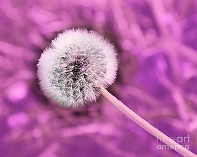 Dandelion Photograph - Just Dandy Mauve by Andee Design