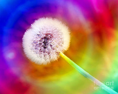 Dandelion Photograph - Just Dandy Taste The Rainbow by Andee Design