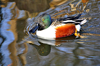 Photograph - Just Ducky by Marty Koch