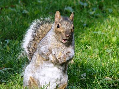Photograph - Just Nuts by Arielle Cunnea
