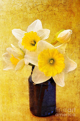 Blooming Digital Art - Just Plain Daffy 2 In - Flora - Spring - Daffodil - Narcissus - Jonquil  by Andee Design