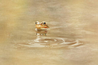 Amphibians Mixed Media - Just She Was Still There by Heike Hultsch