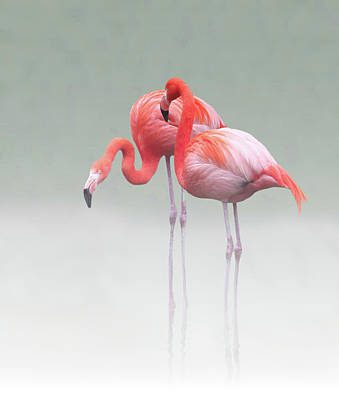 Flamingoes Photograph - Just We Two ... by Anna Cseresnjes