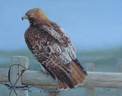 Red Tail Hawk Painting - Kaiser's Hawk by Tammy  Taylor