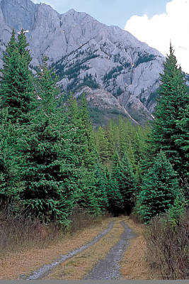 Spruce Painting - Kananaskis 3 by Terry Reynoldson