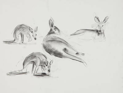Kangaroo Drawing - Kangaroo Charcoal Study #3 by Greg Kopriva