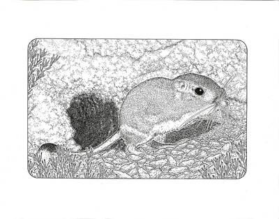 Kangaroo Drawing - Kangaroo Rat by Gary Funk