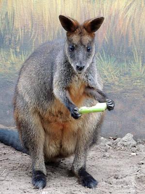kangaroo Snack Original by Munir Alawi
