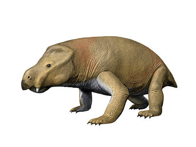 Triassic Photograph - Kannemeyeria Is A Large Dicynodont by Nobumichi Tamura