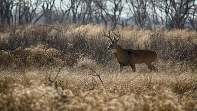 Artistic Photograph - Kansas Whitetail by Garett Gabriel