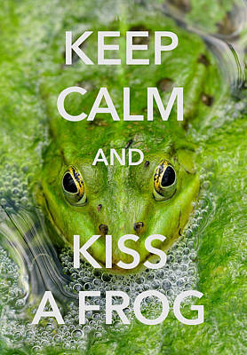 Frog Photograph - Keep Calm And Kiss A Frog Funny Quote by Matthias Hauser